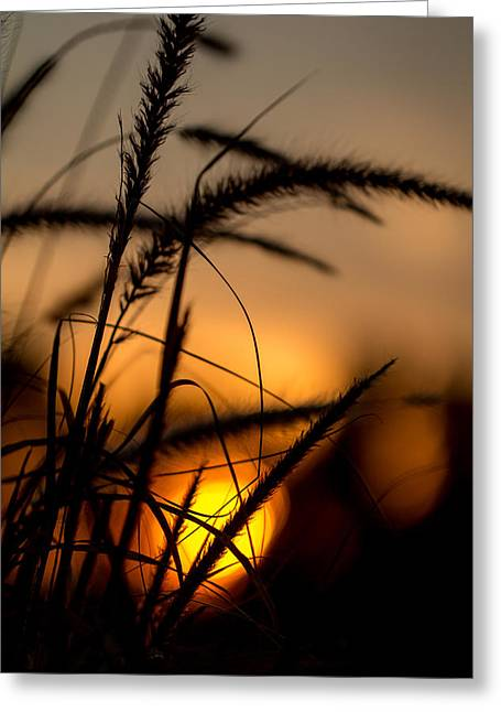 Evening Arrives Greeting Card by Andrea Kappler