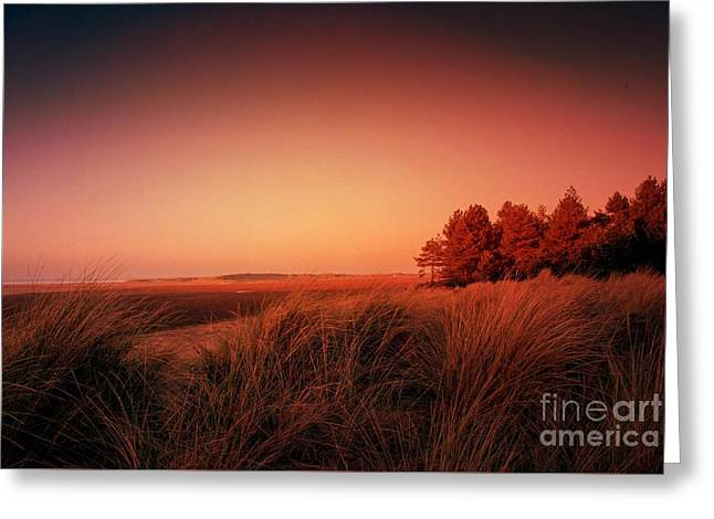Evening At Holkham Greeting Card