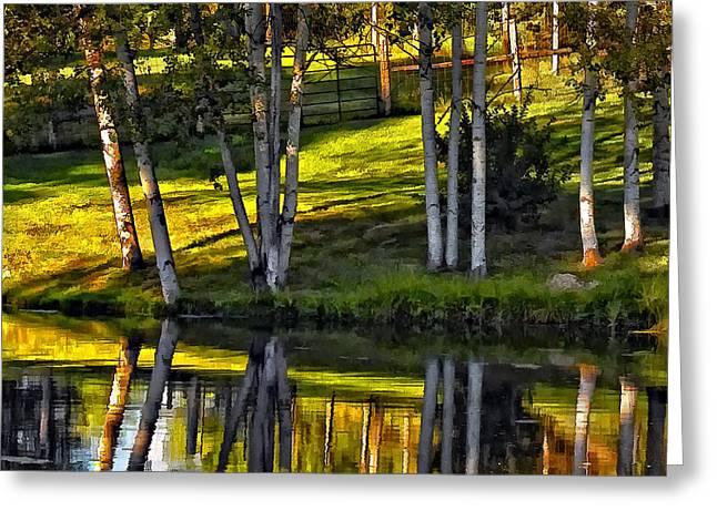 Evening Birches Greeting Card by Steve Harrington