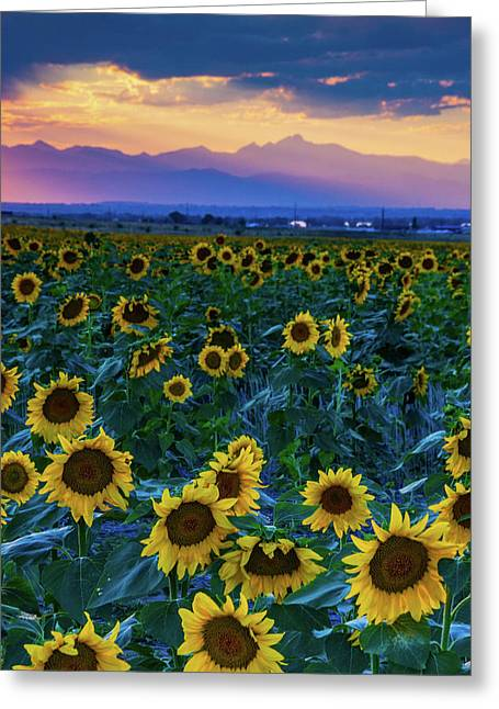 Evening Colors Of Summer Greeting Card