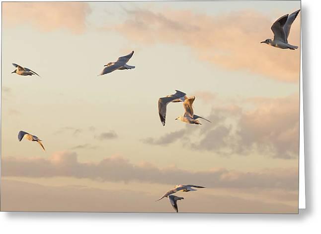 Evening Gulls Greeting Card