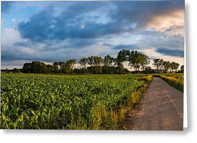 Evening In A Cornfield Greeting Card by Dmytro Korol