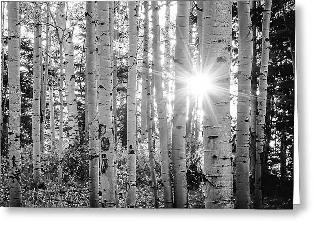 Greeting Card featuring the photograph Evening In An Aspen Woods Bw by The Forests Edge Photography - Diane Sandoval