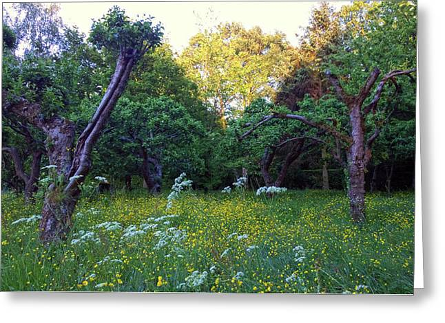 Greeting Card featuring the photograph Evening Light by Anne Kotan