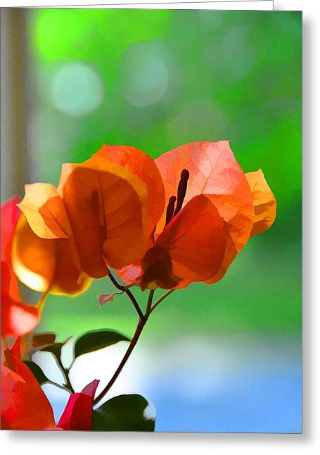 Evening Light Greeting Card by Jan Amiss Photography