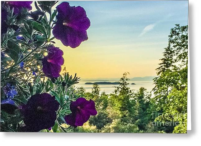 Evening Light On Orcas Island Greeting Card by William Wyckoff