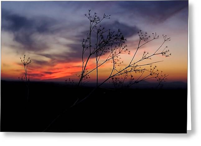 Evening Light Over Meadow Greeting Card