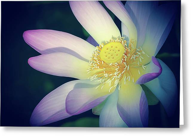 Greeting Card featuring the photograph Evening Lotus  by Julie Palencia