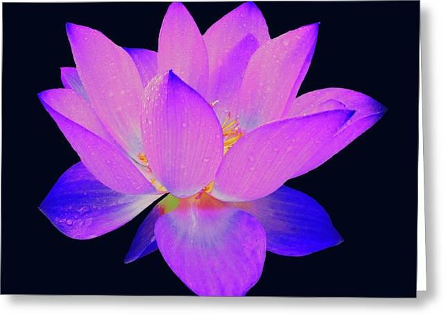 Evening Purple Lotus  Greeting Card