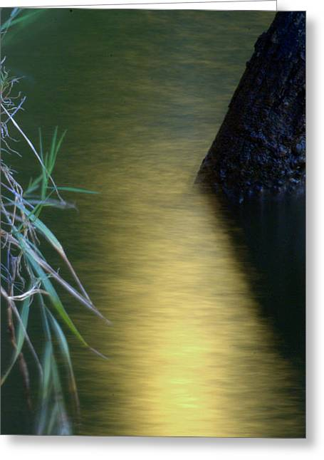 Greeting Card featuring the photograph Evening Reflections by Karen Musick