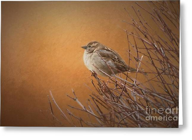 Evening Sparrow Song Greeting Card
