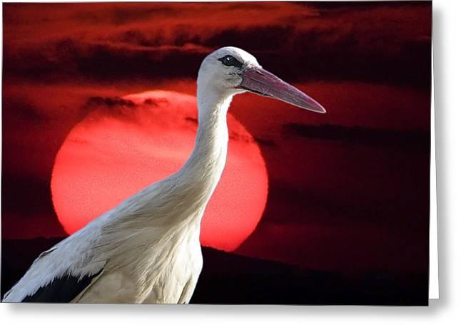 Evening Stork  Greeting Card