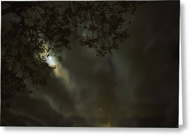 Evening Stroll  Greeting Card by Soli Deo Gloria Wilderness And Wildlife Photography
