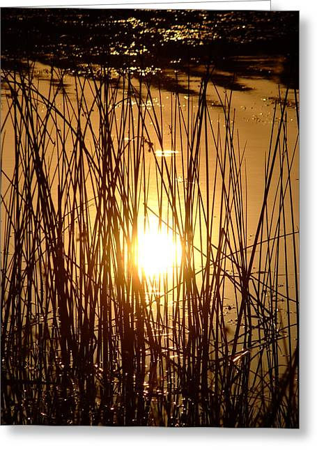 Evening Sunset Over Water Greeting Card
