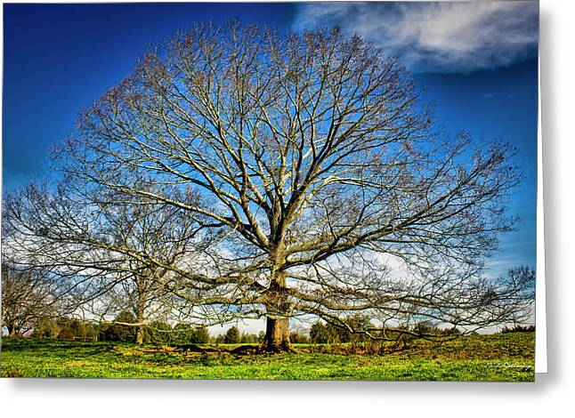 Ever Expanding 2 Field Red Oak Tree Art Greeting Card