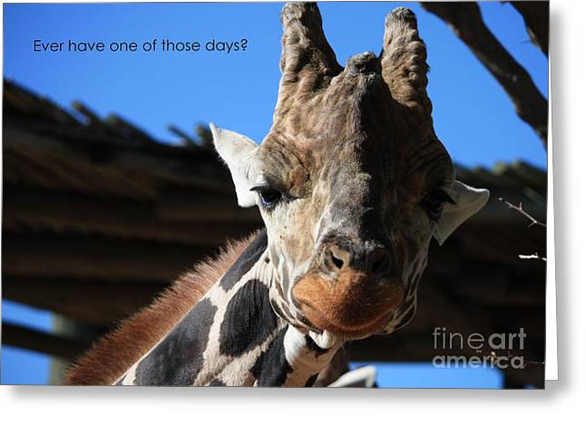 Ever Have One Of Those Days Greeting Card by Carol Groenen