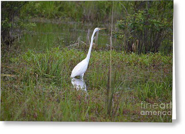 Ever Watchful Egret Greeting Card by Maria Urso
