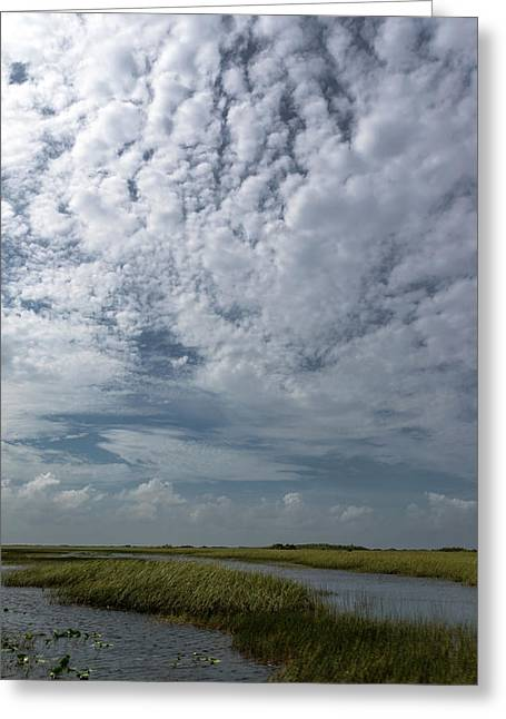 Everglades 1 Greeting Card