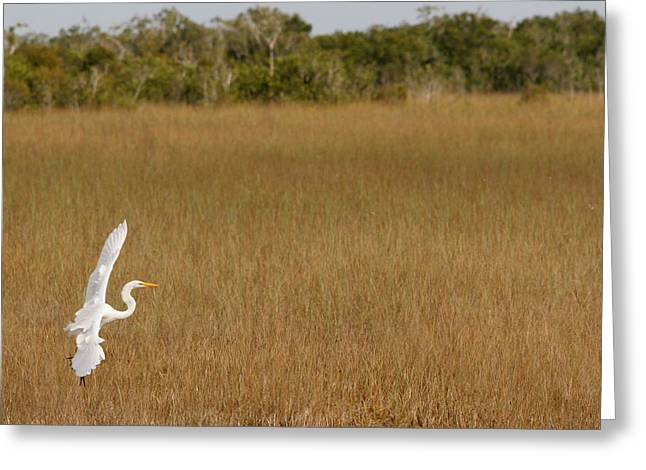 Everglades 429 Greeting Card