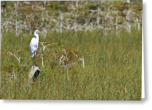 Everglades 451 Greeting Card