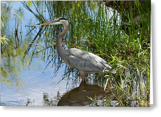 Everglades 572 Greeting Card