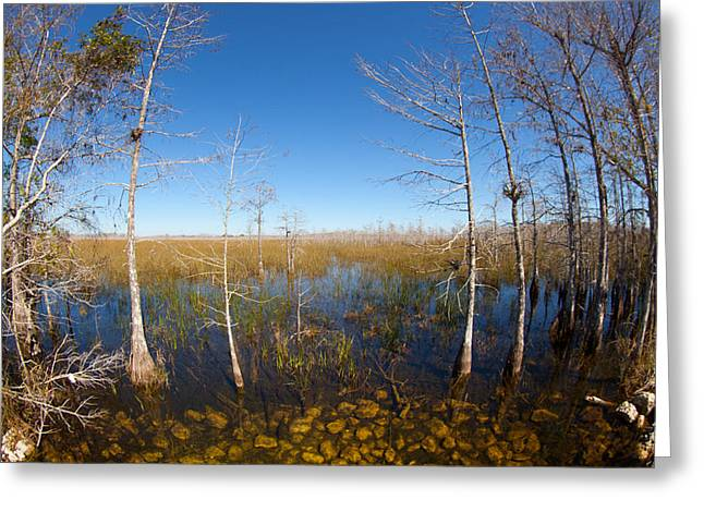 Everglades 85 Greeting Card