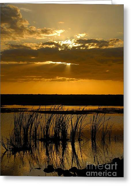 Everglades Evening Greeting Card by David Lee Thompson