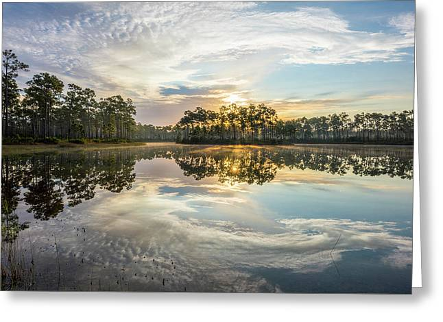 Everglades Ovation Greeting Card