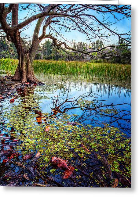 Everglades Reflections Greeting Card by Debra and Dave Vanderlaan