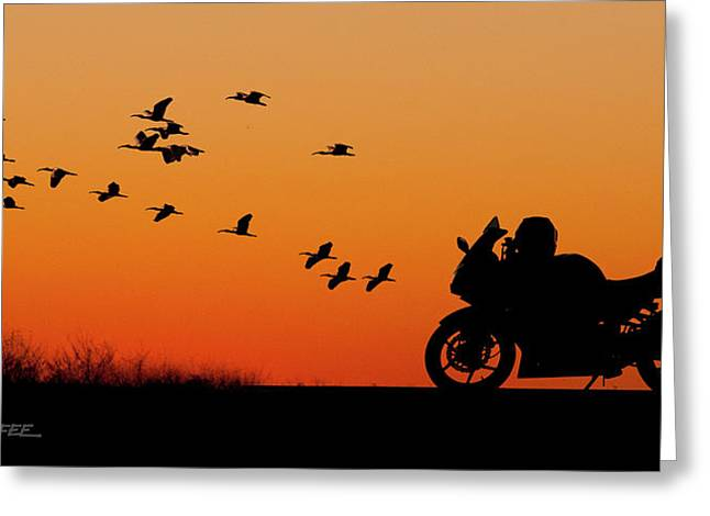 Everglades Sunset Greeting Card by Don Durfee