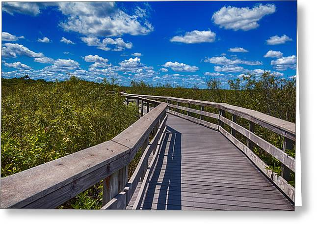 Everglades Trail Greeting Card