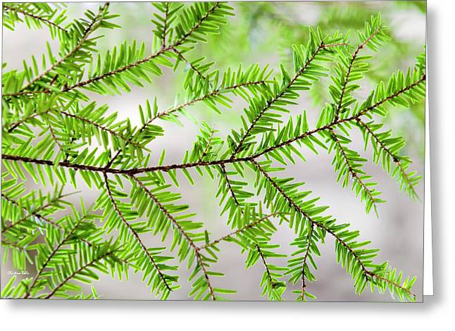 Greeting Card featuring the photograph Evergreen Abstract by Christina Rollo