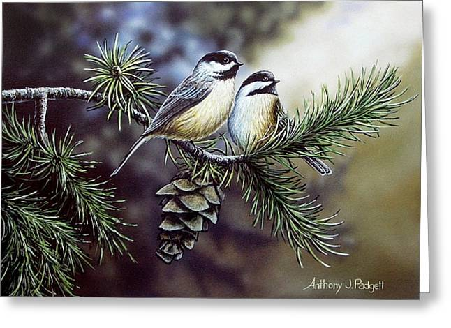 Evergreen Chickadees Greeting Card