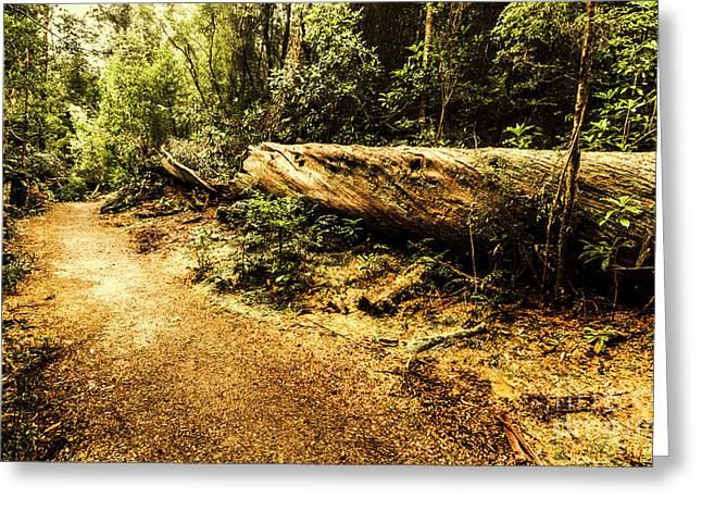 Evergreen Jungle Trails Greeting Card