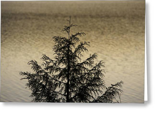 Evergreen Lake Greeting Card by Richard Steinberger