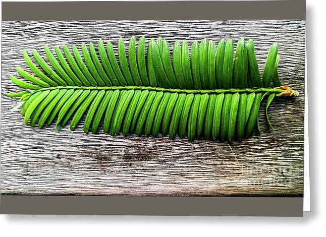 Evergreen On Wood 1 Greeting Card by James Aiken