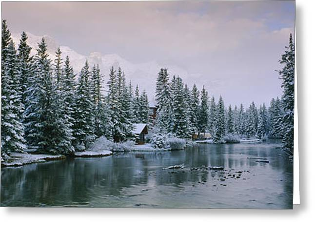 Evergreen Trees Covered With Snow Greeting Card by Panoramic Images