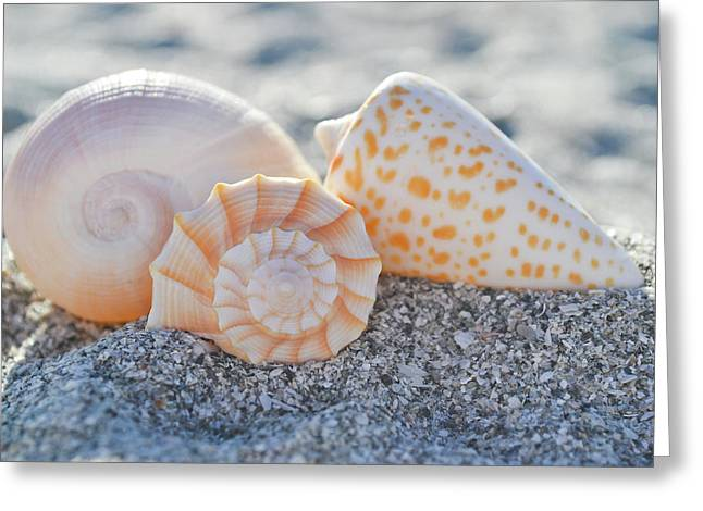 Greeting Card featuring the photograph Every Shell Has A Story by Melanie Moraga