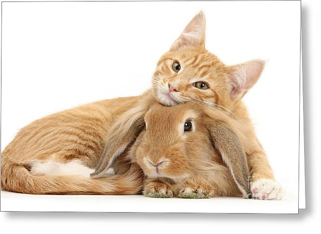 Everybody Needs A Bunny For A Pillow Greeting Card