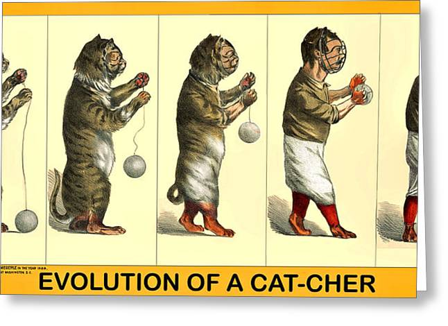 Evolution Of A Cat-cher Greeting Card