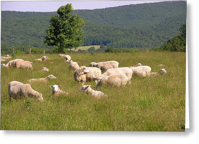 Ewe's Eye View Greeting Card by Peter Williams