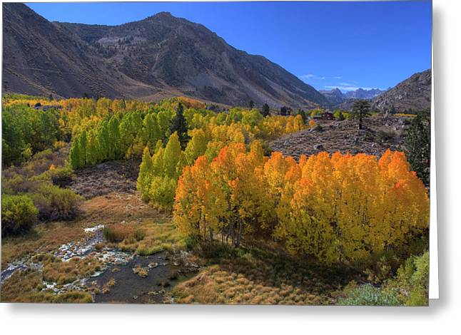 Exceptional Autumn Greeting Card by David Levy