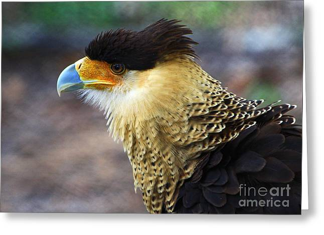 Excited Caracara Greeting Card