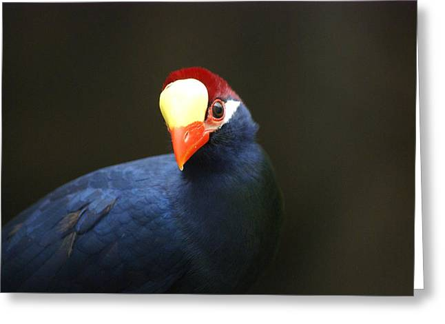 Greeting Card featuring the photograph Exotic Bird by Heidi Poulin