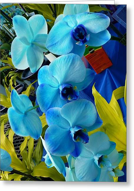 Exotic Blue Orchids Greeting Card by Jeanette Oberholtzer