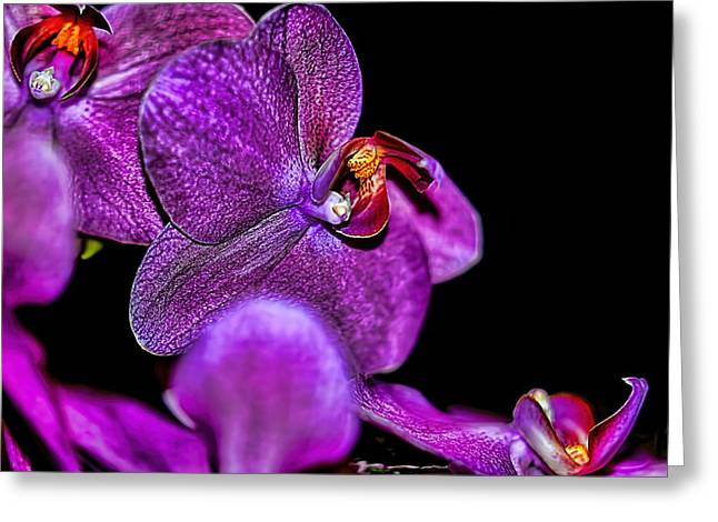Greeting Card featuring the photograph Exotic by Diana Mary Sharpton