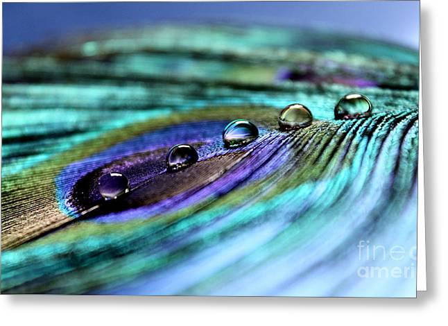 Exotic Drops Of Life Greeting Card by Krissy Katsimbras