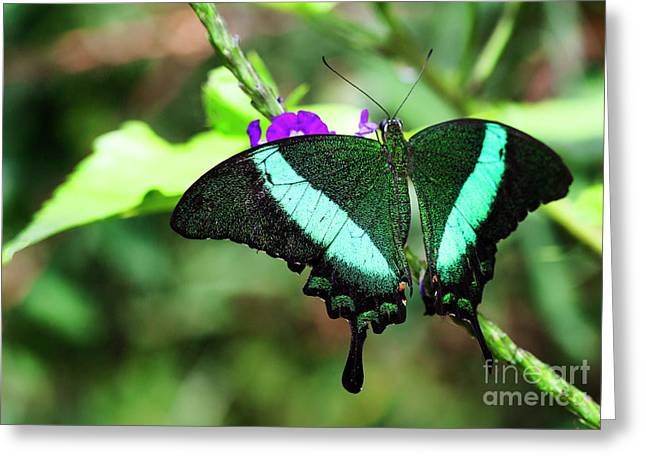 Exotic Emerald Swallowtail  Greeting Card