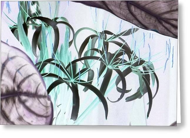 Exotic Flowers As Fine Art Greeting Card by Linda McAlpine
