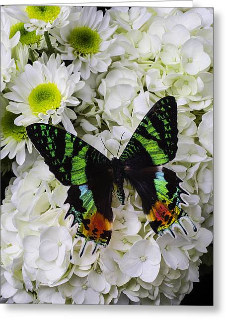 Exotic Green Butterfly Greeting Card by Garry Gay